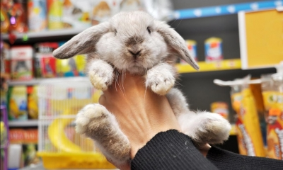Person holding rabbit with animal products in background in pet shop