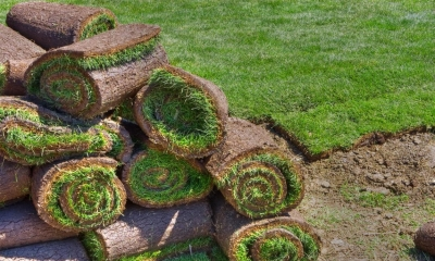 Pile of rolled turf on a lawn
