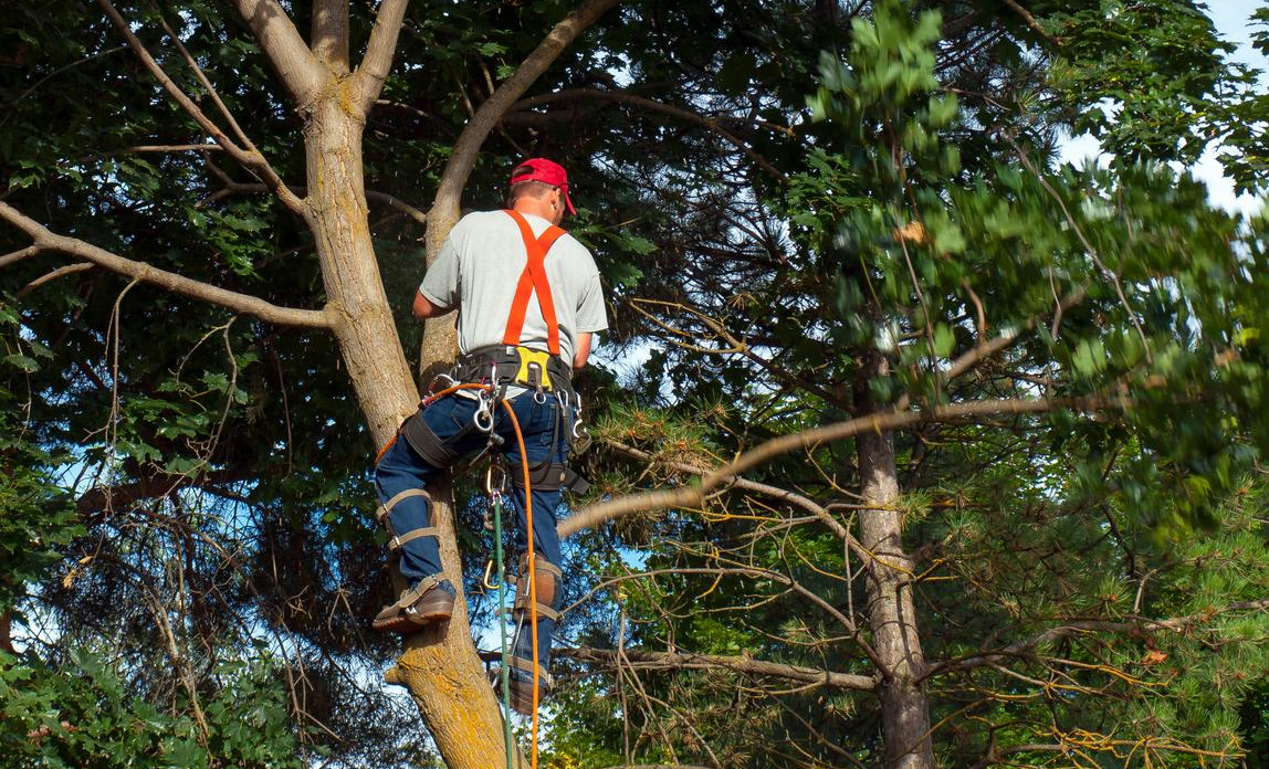 Tree surgeon legal issues | Business Law Donut