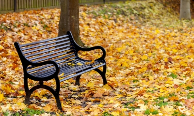 Empty park bench surrounded by fallen autumn leaves