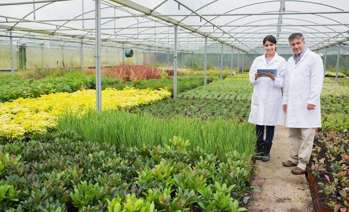 A diverse plant nursery inside a greenhouse
